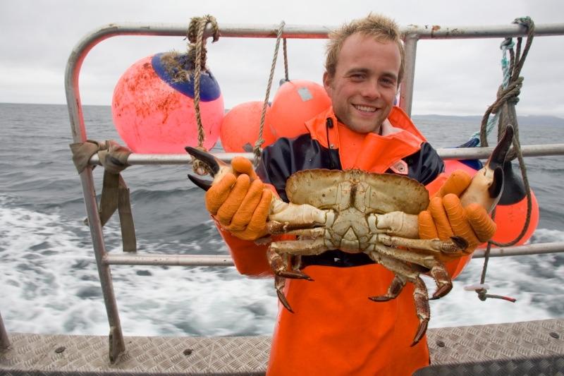чем ловят крабов в японском море